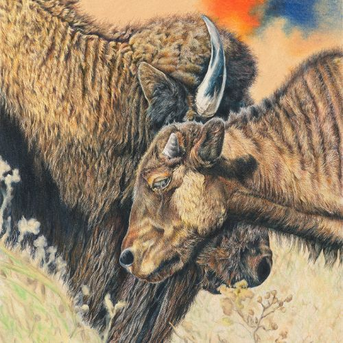 (Grid) Bison by Sharlene Rayl