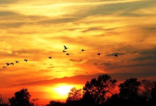 Iphone X Wallpaper Gif Landscape Birds Clouds Deviantart Landscape Nature Orange