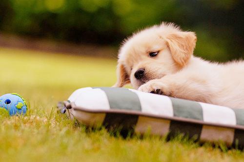 Cute Boy And Girl Friendship Wallpapers Adorable Animal Cute Dog Kawaii Image 122324 On