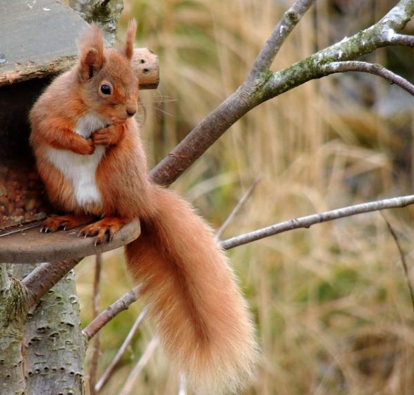 Red Squirrel Pics Cute Animal Closeup Fav Images