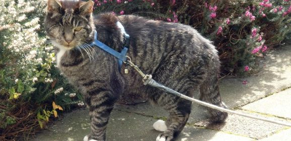 Success Story – Domino Cat 'Comes Back'  Again