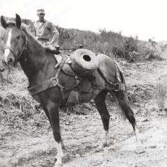 Recalling RECKLESS, Noted War Horse