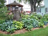 hosta-garden-200