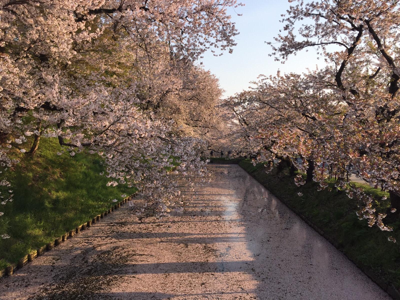 弘前さくらまつり 花筏に津軽富士…桜色の絶景に出会う旅へ