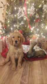 fawn-river-kennels-puppy-gallery-12