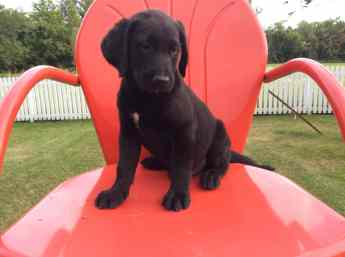 fawn-river-kennels-puppy-gallery-5