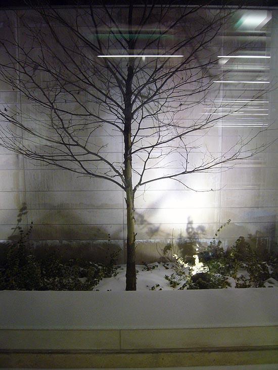 Denuded tree sits amid fresh snow against sleek limestone wall