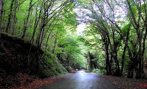 istanbulda-gezilecek-yerler-belgrad-ormanlari