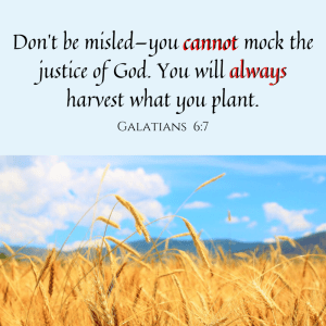 Plant the right seeds