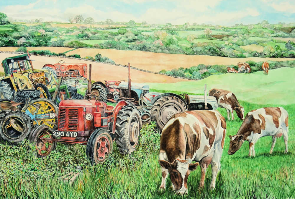 Old tractors, young cows - a watercolour by Faye Edmondson, Somerset, UK
