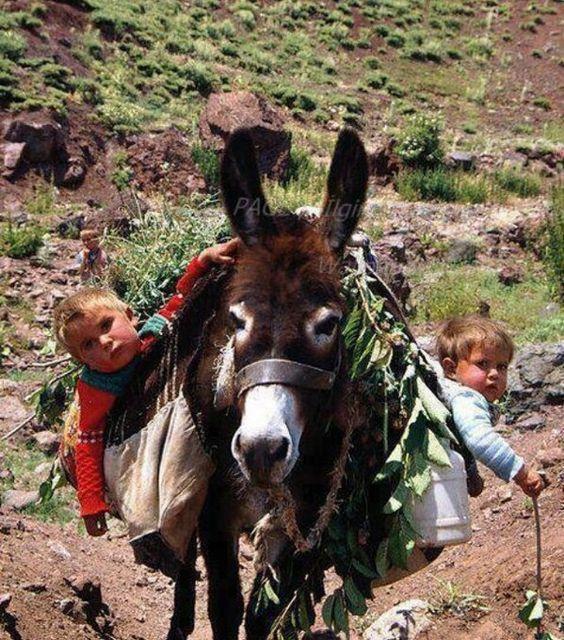 Donkey carrying children