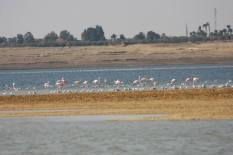 Flamingo_Fayoum_Egypt (10)