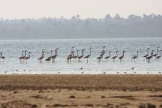 Flamingo_Fayoum_Egypt (12)