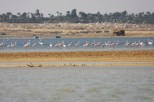 Flamingo_Fayoum_Egypt (18)
