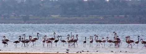 Flamingo_Fayoum_Egypt (32)