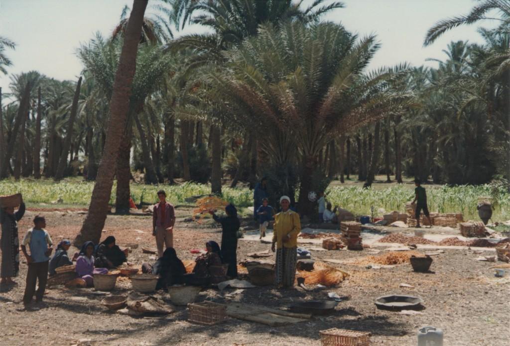 Fayoum-Egypt (20)