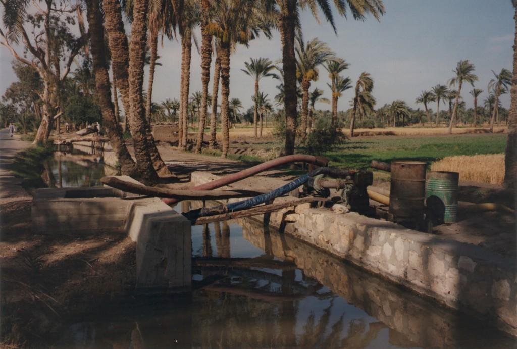 Fayoum-Egypt (21)