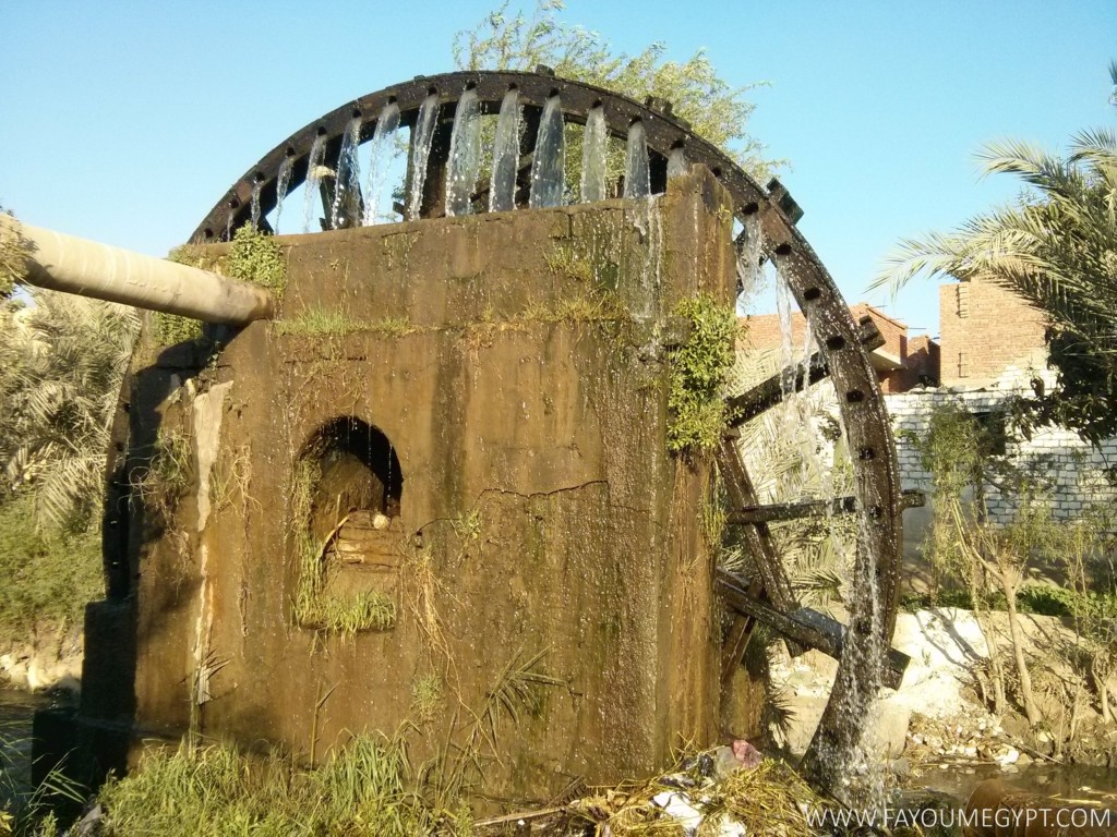 Largest Water Wheel in Egypt (11)