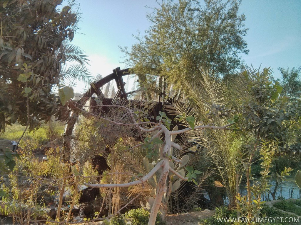 Largest Water Wheel in Egypt (14)