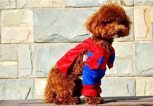 fantasia-homem-aranha-para-cachorro-ou-gato-tamanho-p-D_NQ_NP_22930-MLB20239872244_022015-O Homem Aranha Festa infantil