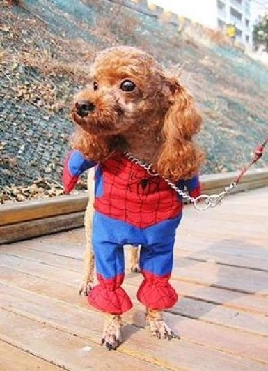 fantasia-homem-aranha-pet-super-luxo Homem Aranha Festa infantil