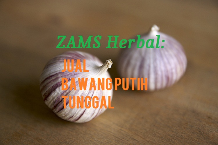 ZAMS Herbal: Jual Bawang Putih Tunggal Kiloan