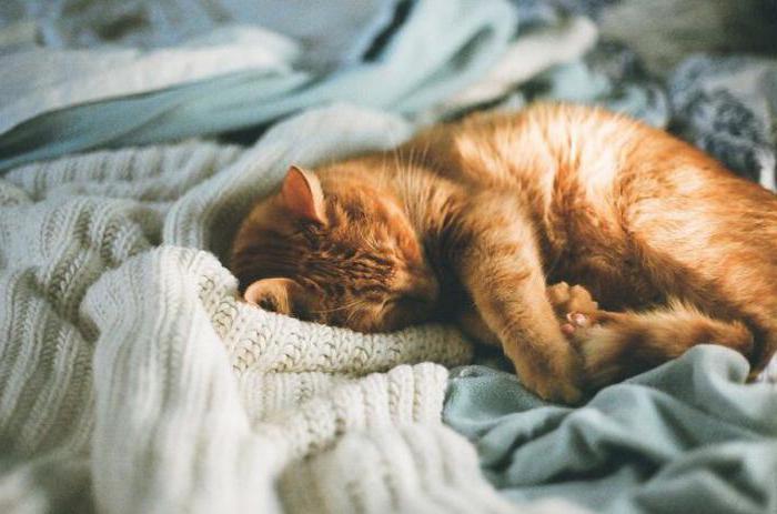 plešatý mokré mačička