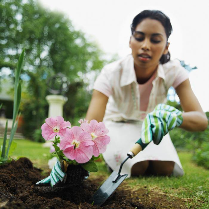 К чему снятся цветы в горшках. Сажать цветы: трактовка сновидения по соннику