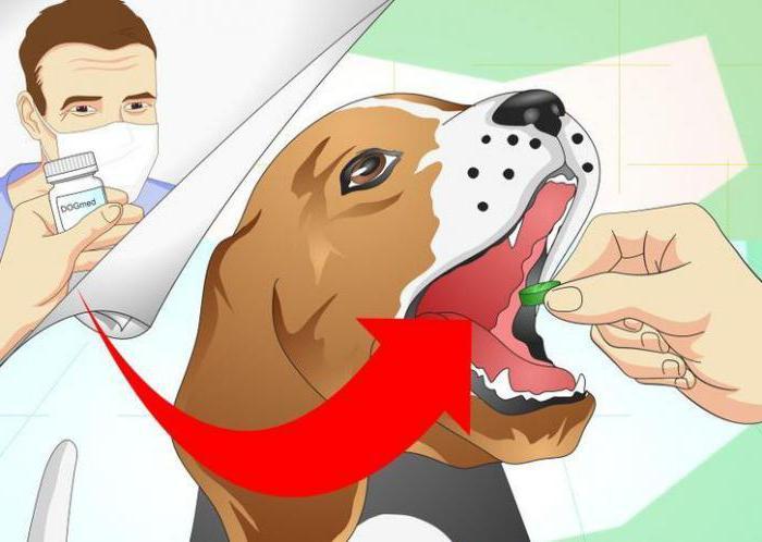 Цетрин собаке от аллергии
