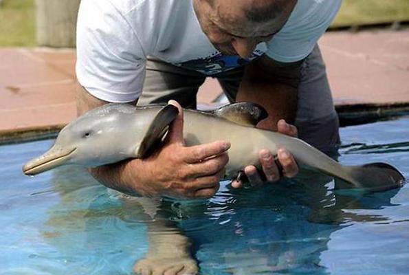 الدلافين الحيوانات البحرية