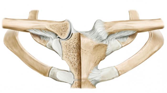 az acromioclavicularis ízület ligamentumainak károsodása)