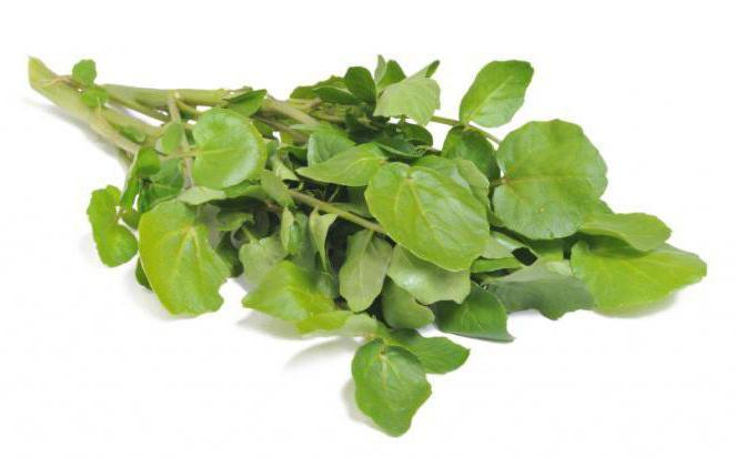 Крест салат полезные свойства и противопоказания