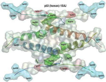 Kde byla použita racemizace aminokyselin