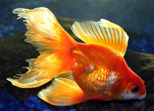 όλα τα μικρά ψάρια που χρονολογούνται