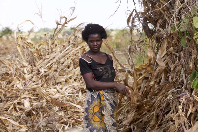 Malawi 2015.34