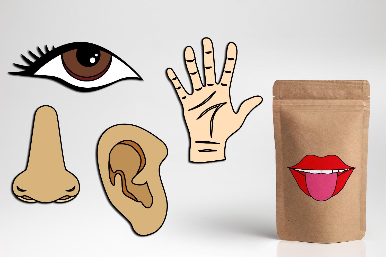 Five Senses Clipart Tongue Mouth Nose Ear Eye Hand