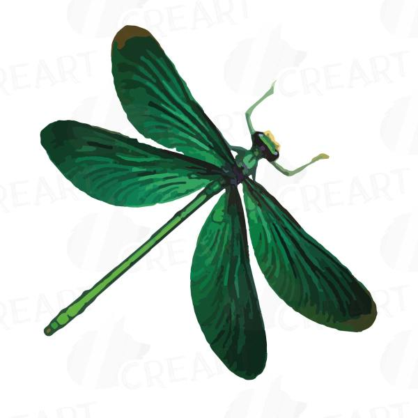 dragonfly watercolor clip art collection