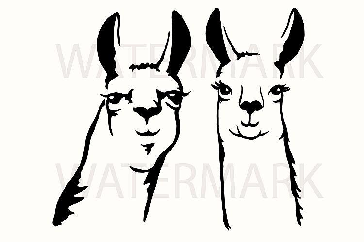 Download Llama Couple Smiling - JPG PNG SVG EPS Hand drawing