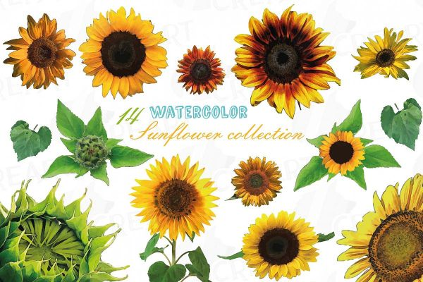 sunflower watercolor clip art pack