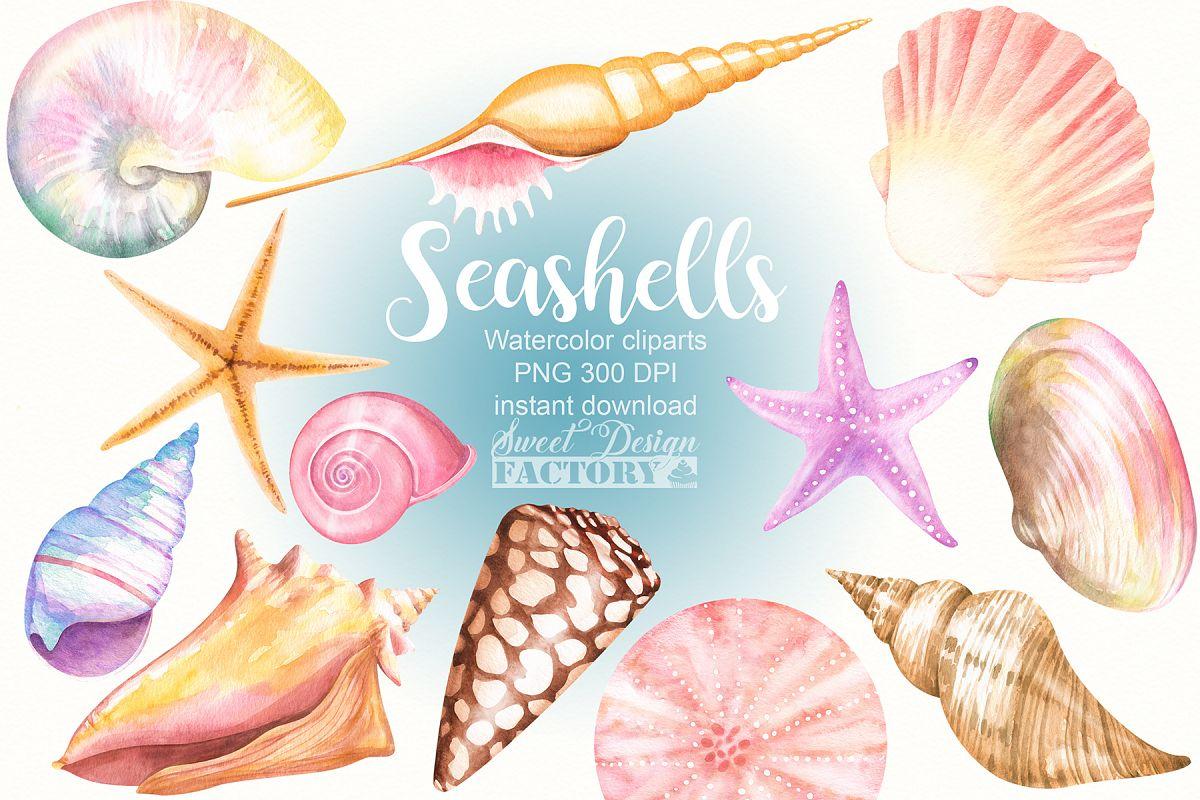 watercolor seashells clipart