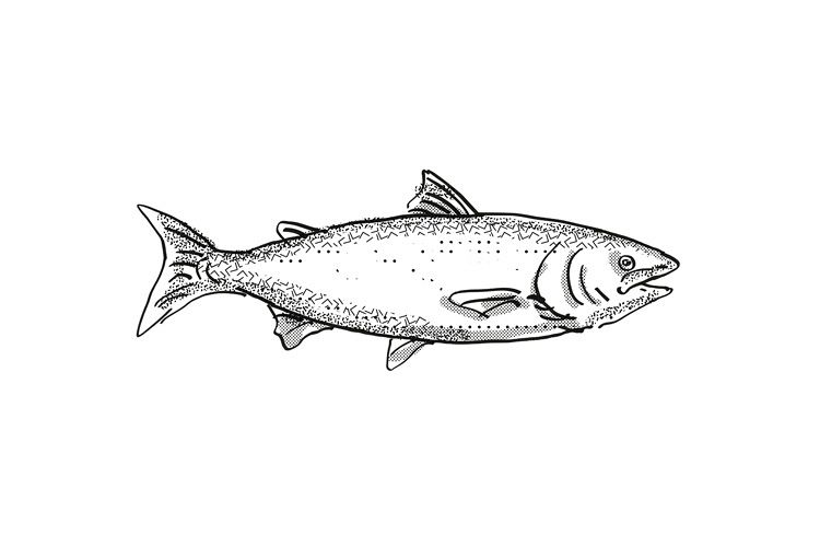 New Zealand King Salmon Fish Cartoon Retro Drawing (361187