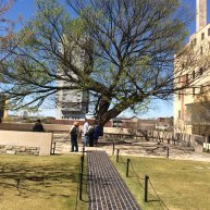 Today it is called the Tree of Life. It was the only tree opposite the federal building that miraculously survived the blast. Today it hold a special place in the hearts of all Oklahomans.