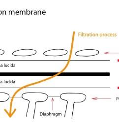filtracni membrana eng 01 [ 1304 x 720 Pixel ]
