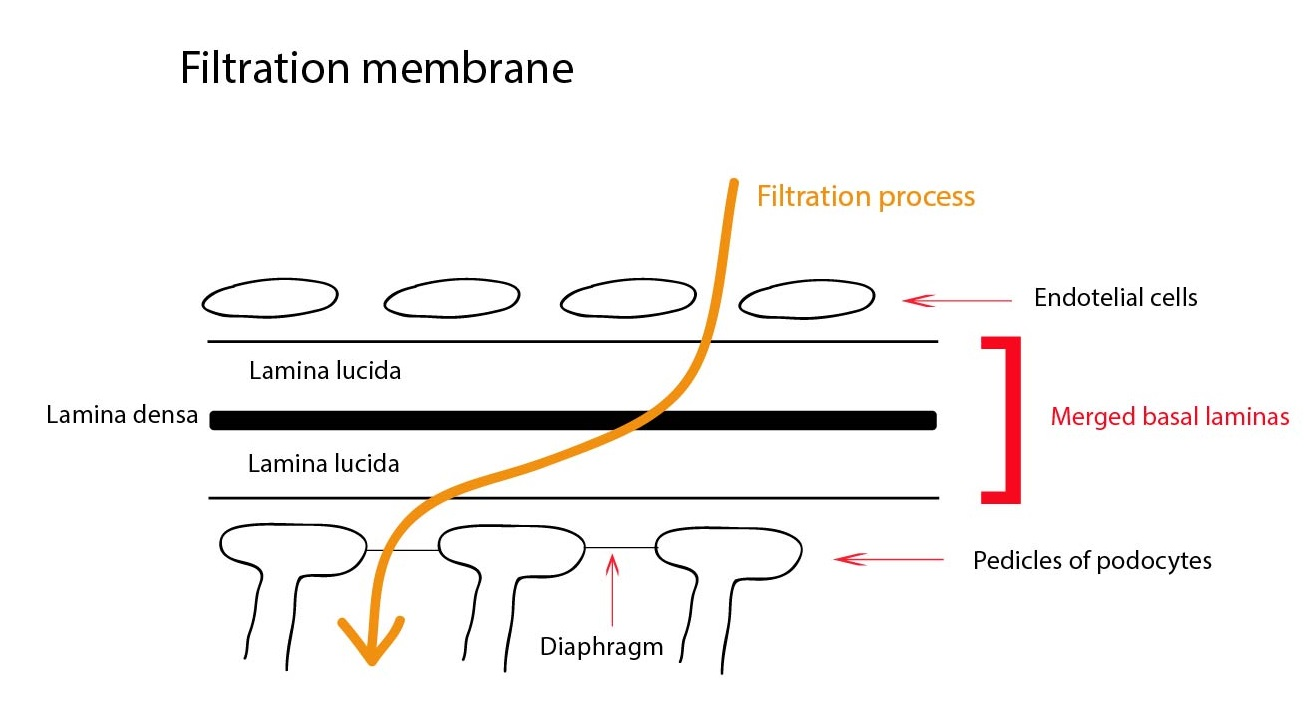 hight resolution of filtracni membrana eng 01