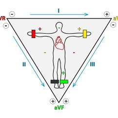 Standard Ekg Diagram 3 Circle Venn Pdf 1 Heart  Functions Of Cells And Human Body