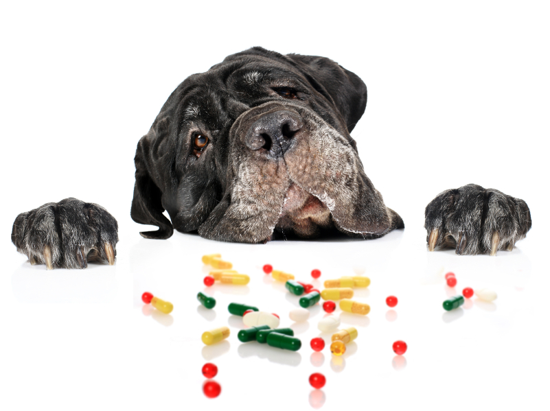 Are there animals in YOUR medicine cabinet?