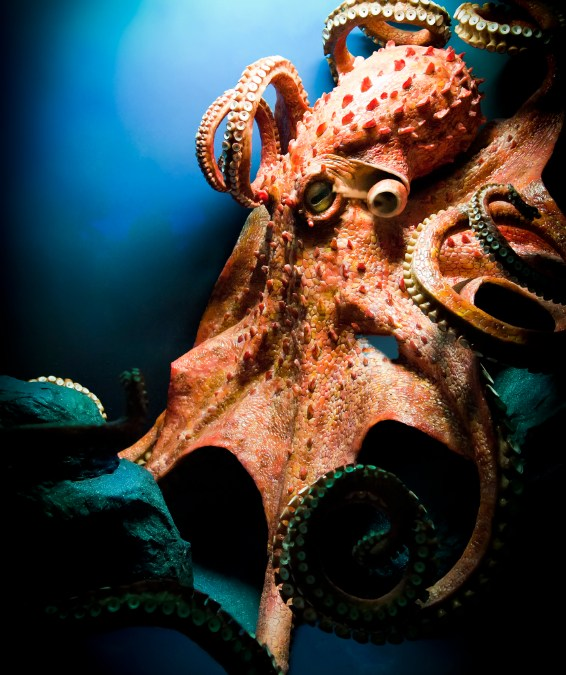 Octopuses are awesome. See why…