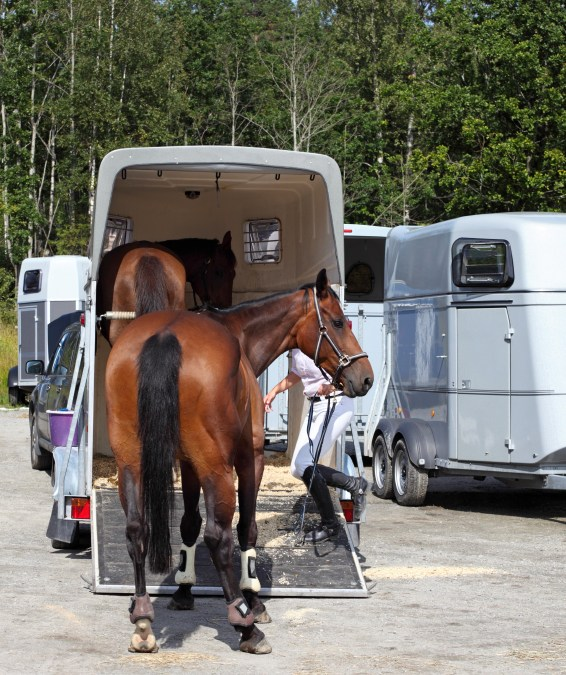 Survey sheds light on Shivers in horses