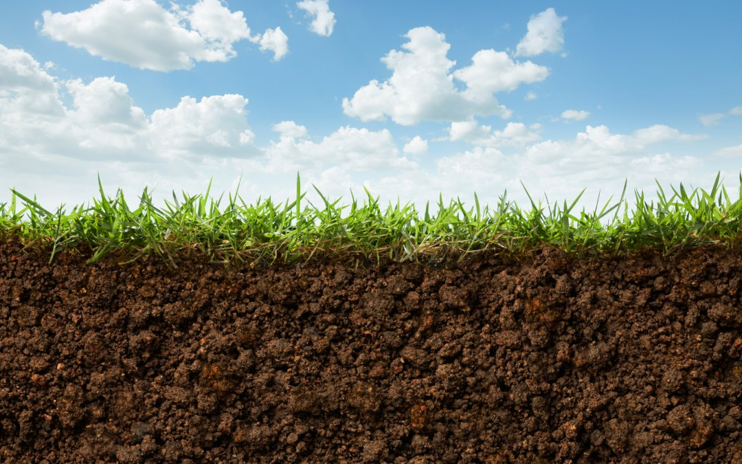 Antibiotics developed from dirt?