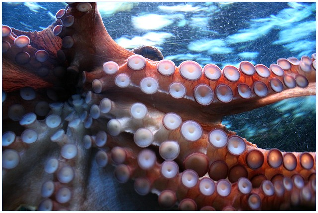 Octopuses Bring A Whole New Meaning To Multitasking Foundation For